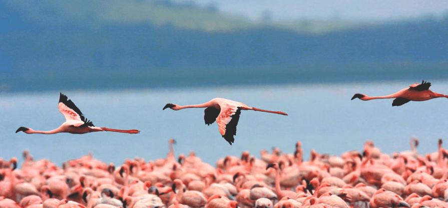 ras al khor santuario aves dubai