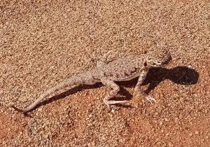 lagarto dragon MleihaSharjah arqueología Emiratos Dubai en español enespanol (6)