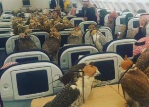 halcon simbolo de emiratos