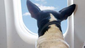 volar con mascotas dubai emiratos